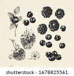 hand drawn set  vintage... | Shutterstock .eps vector #1678825561