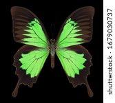 Green Emperor Butterfly...
