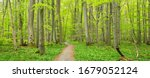 Hainich National Park  Germany  ...