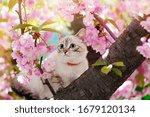 Tabby Kitten Sitting In The...