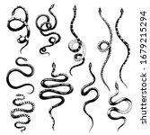 vector set of different snakes... | Shutterstock .eps vector #1679215294