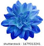 Dahlia Flower Blue. Flower...