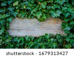 Wooden Plate Entwined With Ivy