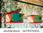 Bird  Budgerigar Couple In...