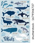 vector illustration with whales ... | Shutterstock .eps vector #1679546737