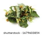 Linden Leaves Linden Flowers Tea