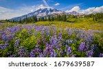 Wildflowers  Mount Rainier ...