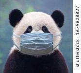 Giant Panda Bear Wearing A Face ...