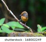 beautiful bird  spectacled... | Shutterstock . vector #168002249