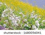 the natural roadside blossom... | Shutterstock . vector #1680056041