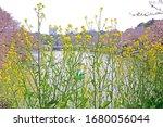 the natural roadside blossom... | Shutterstock . vector #1680056044