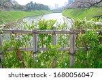 the natural roadside blossom... | Shutterstock . vector #1680056047