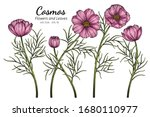 pink cosmos flower and leaf... | Shutterstock .eps vector #1680110977