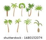 Palm Tree. Brazil Hawaii Exotic ...