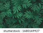 green leaf texture.leaf texture ... | Shutterstock . vector #1680169927