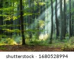 Sunny Morning In Green Forest
