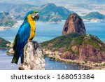 blue and yellow macaw in rio de ... | Shutterstock . vector #168053384