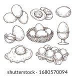 Eggs Sketch. Vintage Natural...