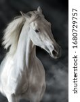 White Horse Portrait In Motion...