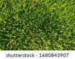 top view green grass background | Shutterstock . vector #1680843907