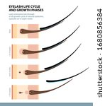 eyelash life cycle and growth... | Shutterstock .eps vector #1680856384