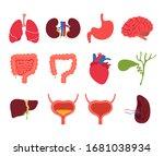 human internal organs isolated... | Shutterstock .eps vector #1681038934