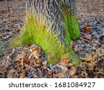 Green Moss Grows At The Base Of ...