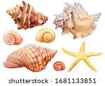 watercolor set of seashells and ... | Shutterstock . vector #1681133851