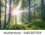 Beautiful Forest In Summer Wit...