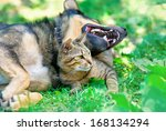Stock photo cat and dog lying together in the lawn 168134294