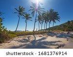 Woman Silhouette Under Coconut...