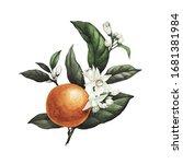 Botanical Illustration. This...