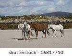 Horses On A Sand Beach. Near...