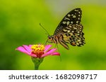 Butterflies Are Animals That...