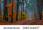 Autumn Forest. Pleasant Walk In ...
