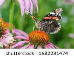 Butterfly Pollinates On Flower...