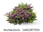 Flower Bush Tree Isolated...
