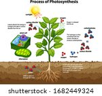 diagram showing process of... | Shutterstock .eps vector #1682449324