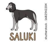 cute cartoon saluki dog breed...   Shutterstock .eps vector #1682542204