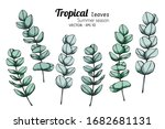 set of tropical leaf drawing... | Shutterstock .eps vector #1682681131