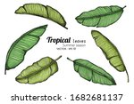set of banana leaf drawing... | Shutterstock .eps vector #1682681137