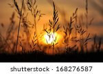 field of grass during sunset  | Shutterstock . vector #168276587