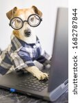 Adorable Dog Is Working On...