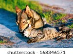 Stock photo dog and cat have a rest together outdoor 168346571