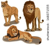 Set of lions - stock vector