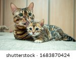 An Adult Cat Caresses Its...