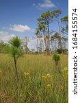 Prairie in Big Cypress National Preserve, Florida, USA