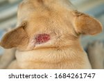 Hot Spot On Dog's Neck During...