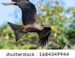 Black Kite Flying With Trees