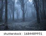 Spooky Misty Foggy Dark Forest...